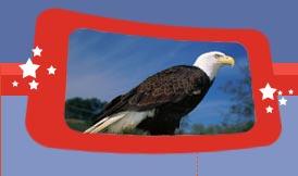 eagle tax & accounting llc Logo