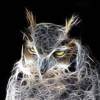 Wild Owl Digital