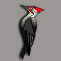 Woodpecker Design