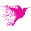 Online Birds Logo