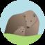 Brown Bear Creative logo