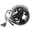 Dove Web Consulting Logo