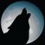 MoonDog Web Hosting and Design logo