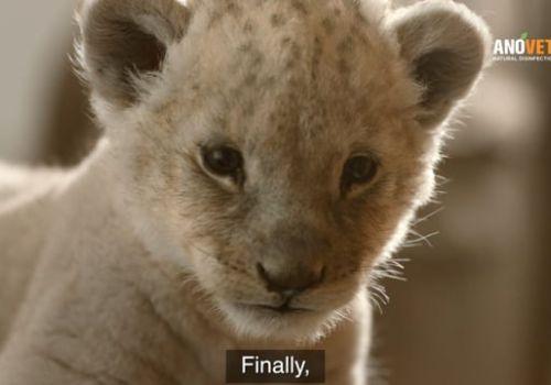 ANOVET Animal Care Film