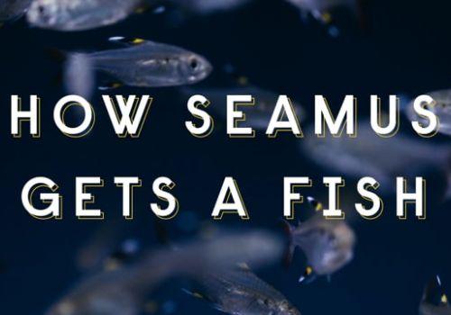 How Seamus Gets A Fish