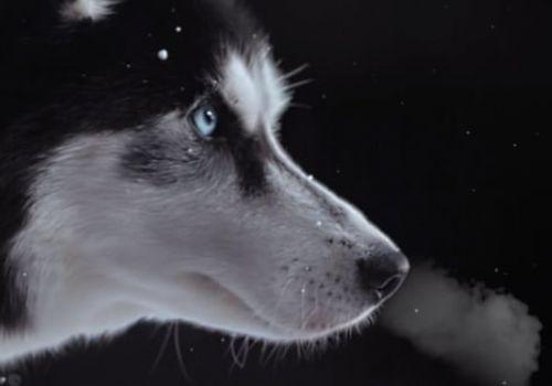 NIU / Huskies. Never. Quit.