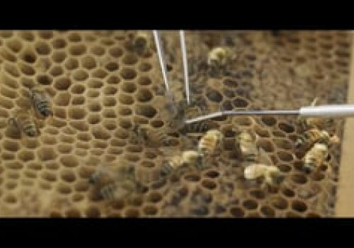 The Decline of Bees