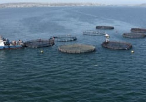 Trout Farming South Africa