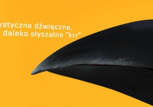 biz KRUK
