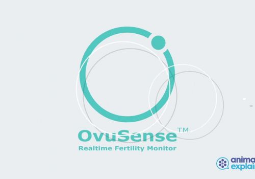 Ovusense USA // Animation Explainers