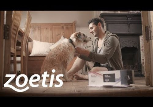 PROMOTIONAL VIDEO // Zoetis: Pet Dialog+